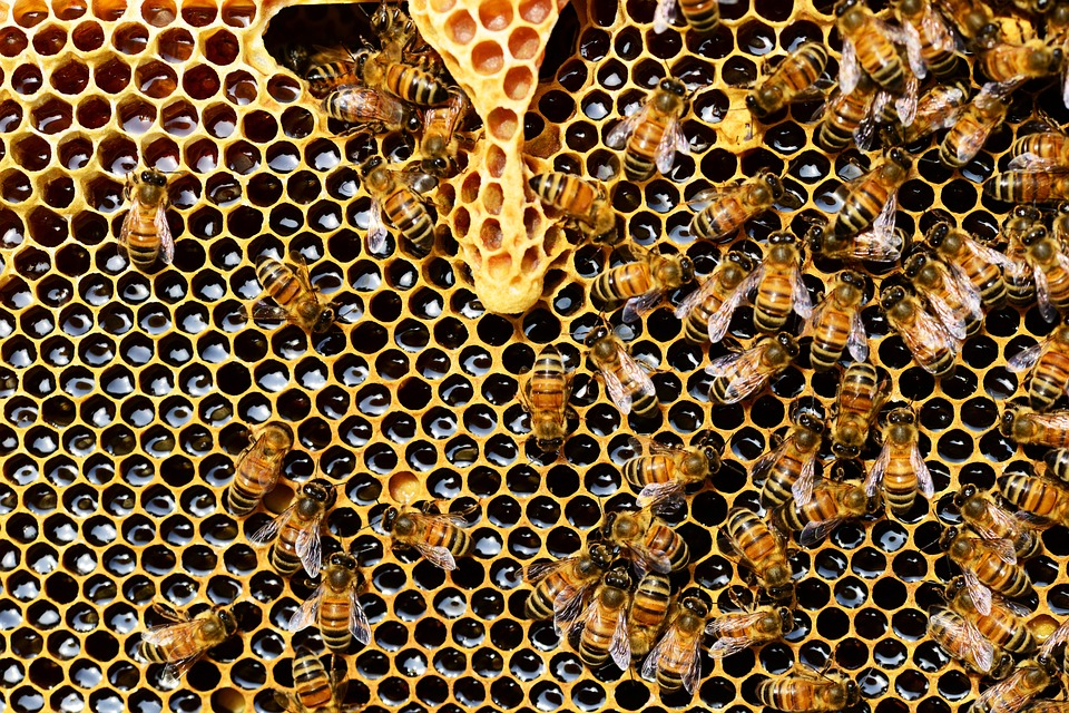 queen-cup-med-honey